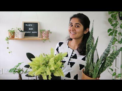 Best Low Light Indoor Plants Easy To Grow Youtube