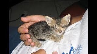 Man Saves Blind Kitten, But Was Never Prepared For This Transformation!
