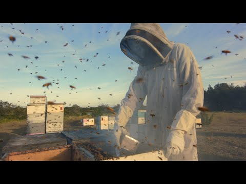 How A Beekeeping Hobby Turned Into A Sweet Career