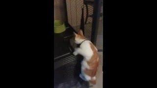 Kennel Trained Kitten!
