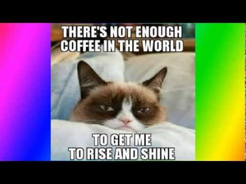 hqdefault top 50 funniest and best grumpy cat memes youtube