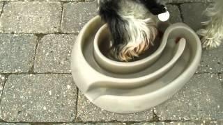 Ciotola anti-ingozzamento per cani
