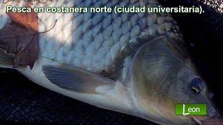 Pesca en costanera norte (ciudad universitaria). Ciudad de Buenos Aires.