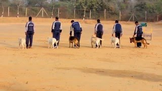Trained Indian  Dogs Video