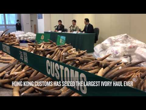 Record ivory seizure in Hong Kong