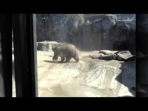 Captivity Drives Animals Insane