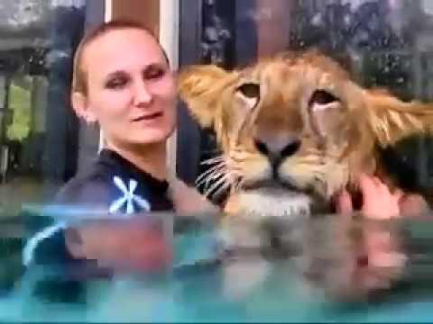 Underwater Tiger Swimming Myrtle