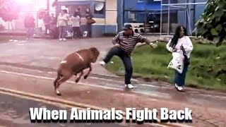 When Animals Fight Back