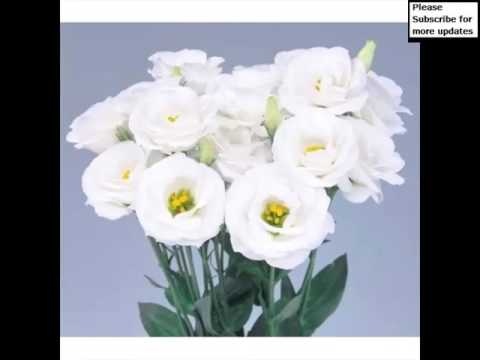 white-lisianthus-|-picture-collection-of-flowers
