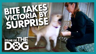 Surprise Attack During Training Shocks Victoria | It's Me or the Dog