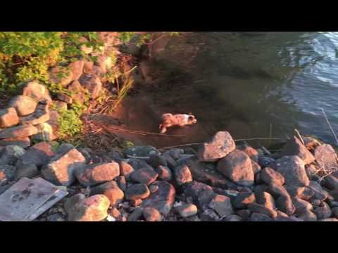 Phoenix running at water's edge