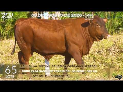 LOTE 65 CORO 2424