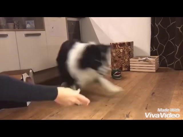 Kopfarbeit für den Hund