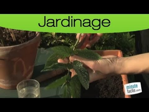Jardinage bouturer une plante d 39 int rieur youtube for Jardinage d interieur