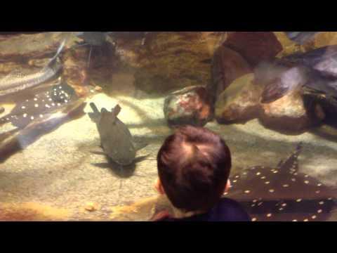 Shedd Aquarium   Chicago, Illinois.