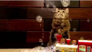 Кошки:  нарезка смешных и трогательных видео