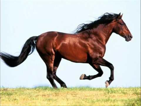 Suara Kuda