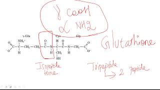 Isopeptide bond