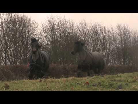 Horse Reunion