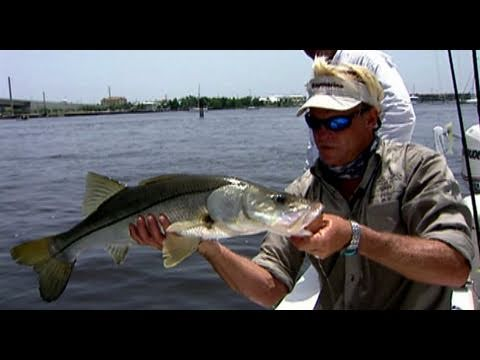 Bridge Fishing for Snook with DOA Terroreyz in Stuart Florida
