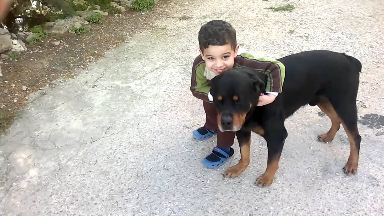Rottweilers with Kids - YouTube