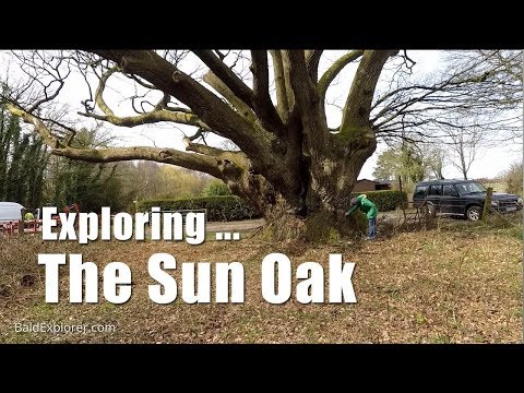 Walks in England: Exploring the Sun Oak Nr Horsham