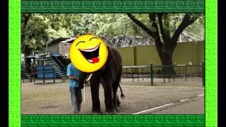 KBS(kebun binatang SURABAYA).Episode 3 . DUNIA ANAK #Hewan gajah