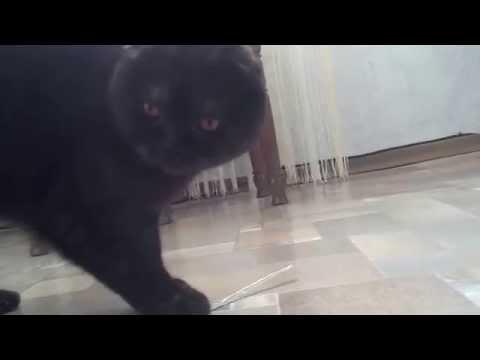 Сердитый кот по имени Федот