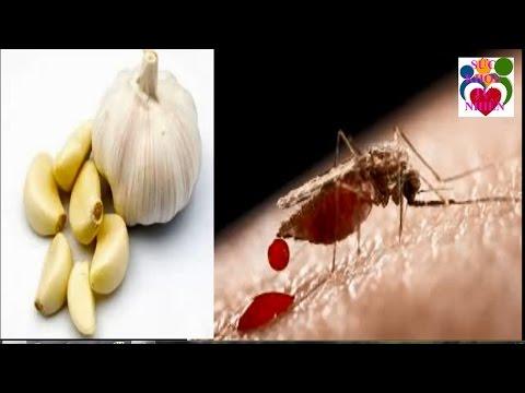 10 Cách Trị Muỗi Đốt Tuyệt Vời Không Cần Thuốc Lúc Nào Cũng Có Trong Bếp Mà Bạn Không Biết