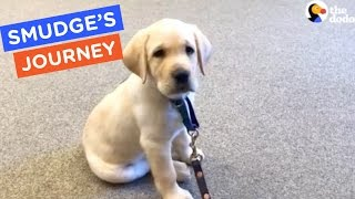 A Guide Dog's Life: Smudge's Journey Ep. 6 | The Dodo thumbnail