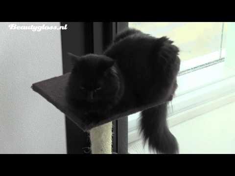 Nieuw huisdier: Manis de poes