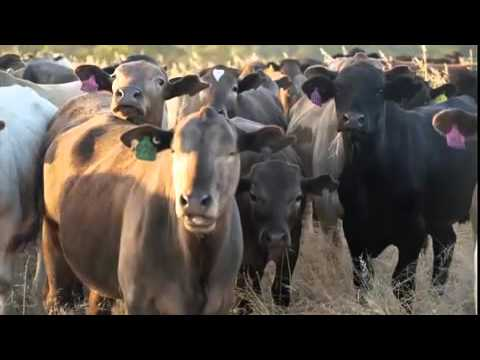 Blackwood Valley Organic and Grass Fed Beef - Western Australia
