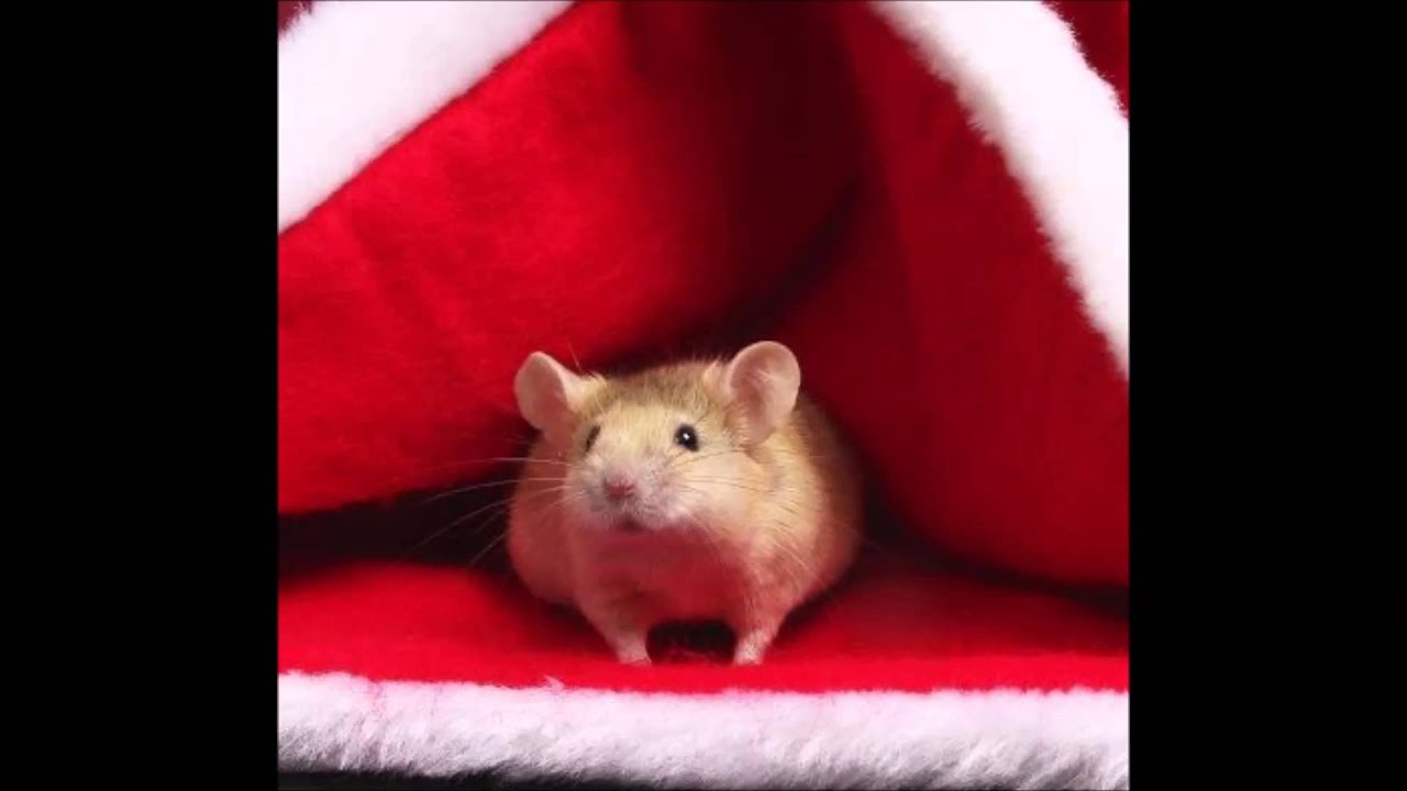 christmas mouse images