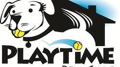How do my pets greet my pet sitter? Play Time Pet Care | Mesa, Gilbert, Queen Creek AZ