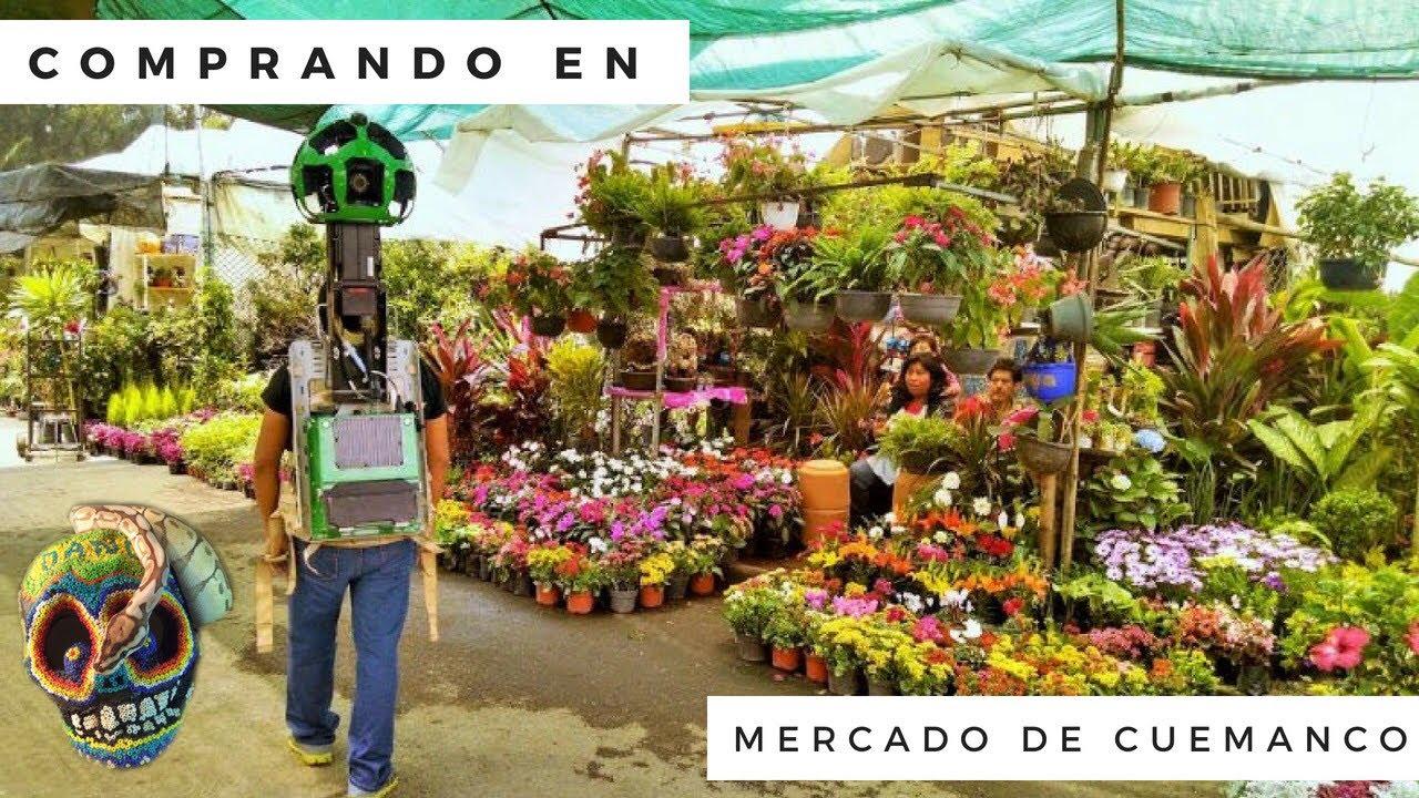 Mercado de cuemanco donde comprar plantas mordida de for Donde venden plantas