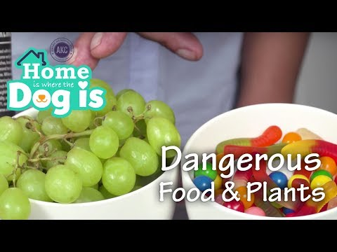 Episode 5 - Dangerous Food and Plants  - AKC's Home is Where the Dog is