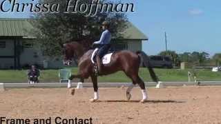 Dressage training for getting the frame and contact you want
