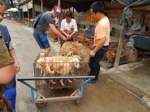 Zwei deutsche Tierschützer retten Hunde in China