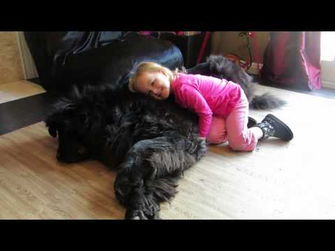 Tiny Girl, Giant Dog, Massive Love