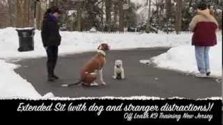 5 Pound, 5 Month Old Puppy Off Leash K9 Training New Jersey