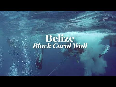Scuba Diving Belize's Black Coral Wall