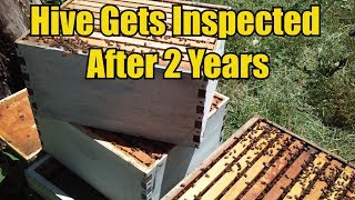bee-hive-gets-inspected-after-2-years