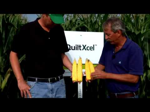 Quilt Xcel Fungicide Early (V-V8) for Stronger Stalks - YouTube : quilt xcel fungicide - Adamdwight.com