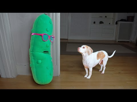 Dogs Vs Giant Pickle In Disguise Prank: Funny Dogs Maymo & Potpie