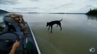 Sled Dog Biathlon Training