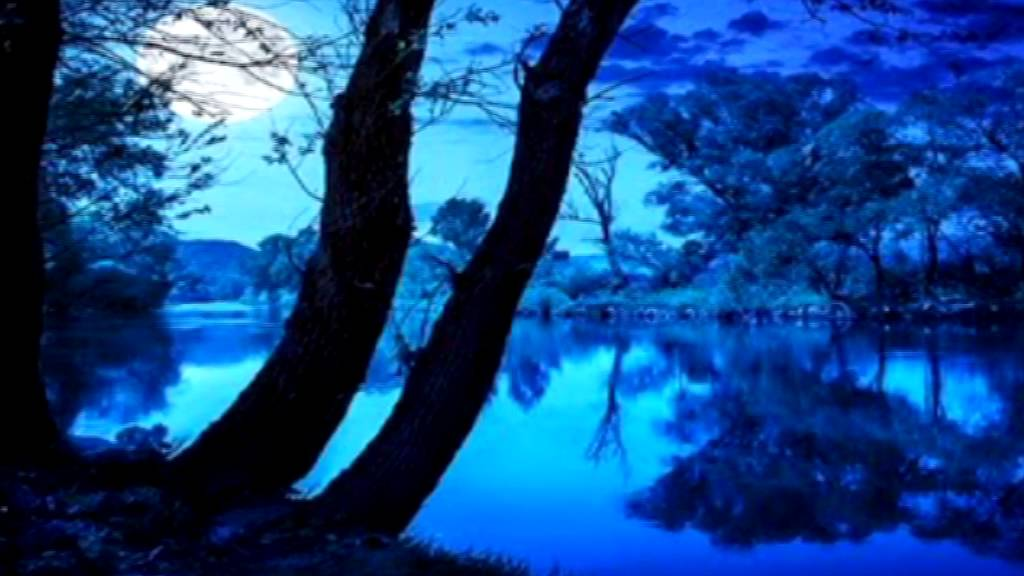 Night Time Forest Soun...