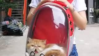 Прозрачный рюкзак-переноска для животных до 8 кг