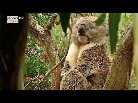 (Doku in HD) Die letzten Paradiese - Australien - Land der Mythen und Legenden