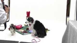 犬の撮影,クリスマスカード、年賀状用に!サンタとトナカイのコスプレ。...