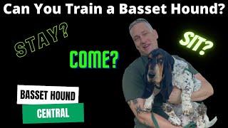 Basset Hound 101 | Can You Train a Basset Hound?